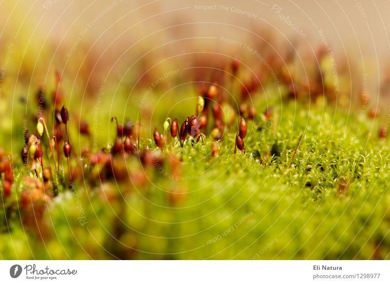 Mooslandschaft Natur Landschaft Pflanze Erde Frühling Sommer Schönes Wetter Garten Park Wiese Blühend Erholung Wachstum ästhetisch nass natürlich braun gelb