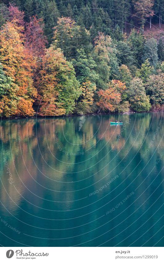 Herbstgold Mensch Natur Ferien & Urlaub & Reisen Erholung Einsamkeit Landschaft ruhig Wald See träumen Zufriedenheit Freizeit & Hobby Tourismus Idylle Ausflug