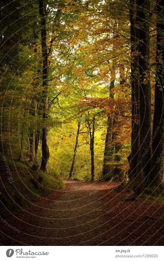 am Ende wird's hell... Spazierweg Ferien & Urlaub & Reisen Ausflug Natur Landschaft Herbst Wald alt atmen Erholung dunkel gelb gold Lebensfreude Romantik ruhig