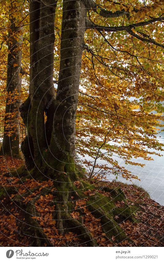 festhalten Natur Pflanze Baum Blatt Wald Umwelt gelb Leben Traurigkeit Herbst orange Wachstum gold Klima Vergänglichkeit Hoffnung