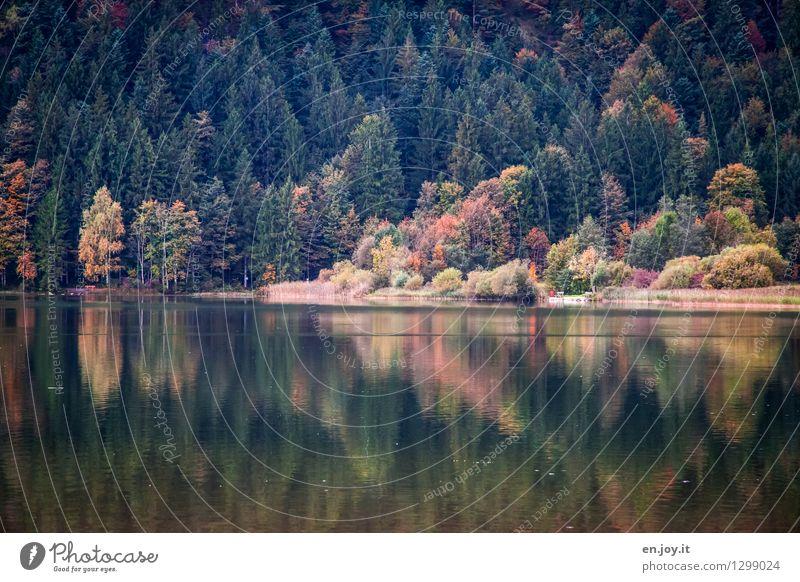 Abschied Natur Ferien & Urlaub & Reisen Erholung Landschaft Einsamkeit ruhig Wald Traurigkeit Herbst See träumen Zufriedenheit Idylle Ausflug Klima