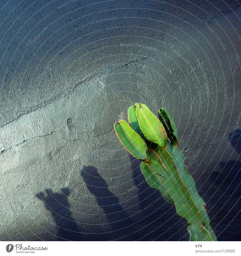 KAKTUS grün Pflanze Wand grau glänzend Wüste silber Putz Mexiko Kaktus Täuschung Sukkulenten