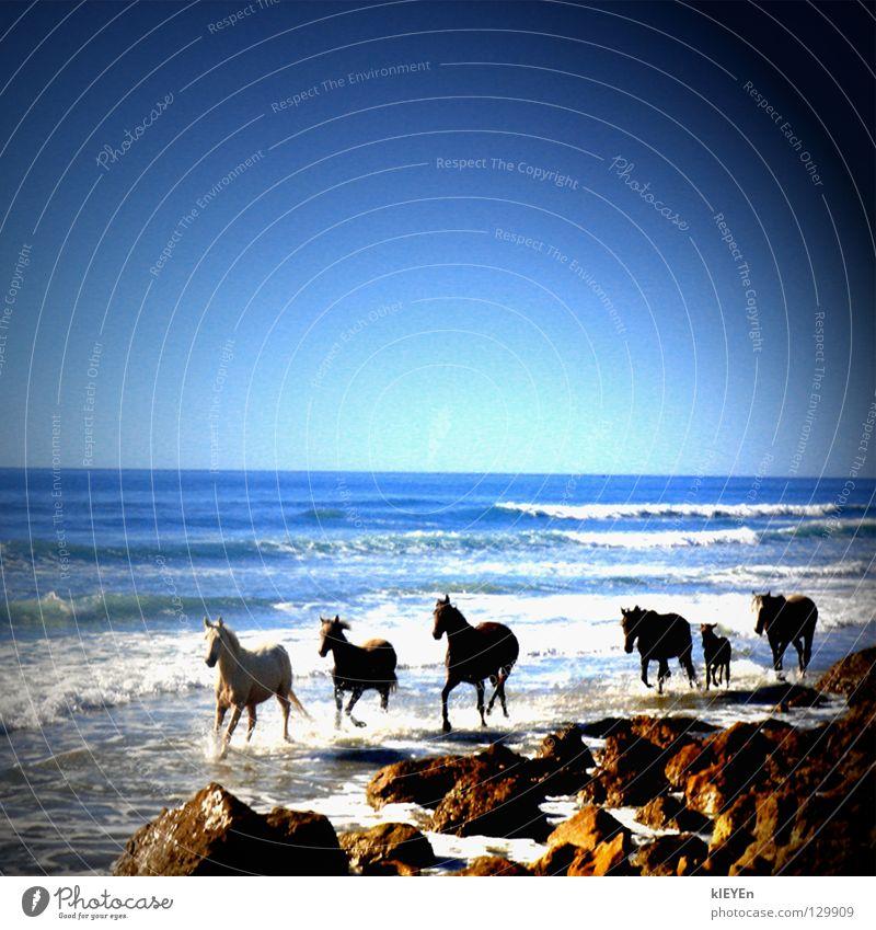 Strandpferde Himmel Sonne Meer Sommer Freude Strand Ferien & Urlaub & Reisen Freiheit Stein Wellen Pferd Säugetier Gischt traumhaft Fohlen