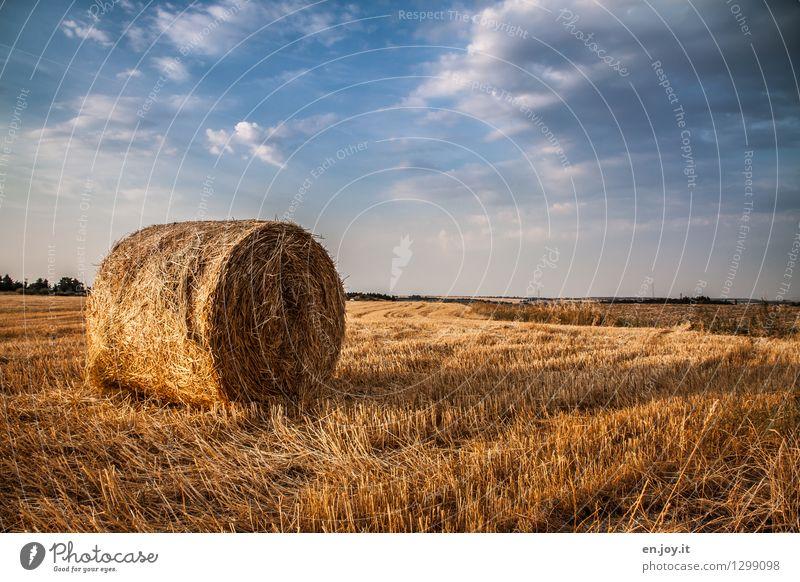 Stoppelfeld Himmel Natur blau Sommer Gesunde Ernährung Landschaft Wolken Ferne gelb Herbst Gesundheitswesen Horizont Feld Wachstum Schönes Wetter Landwirtschaft