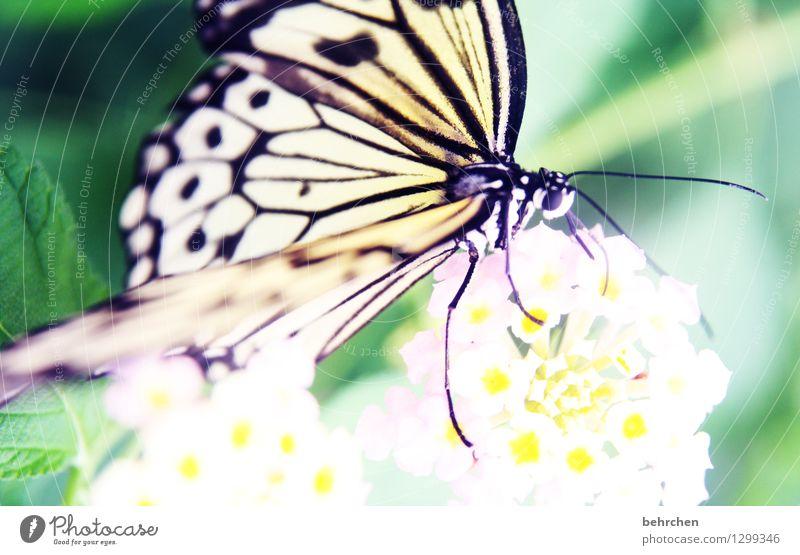 erwartungsvoll Natur Pflanze Sommer schön Blume Erholung Blatt Tier Blüte Auge Wiese Beine außergewöhnlich Garten fliegen Park
