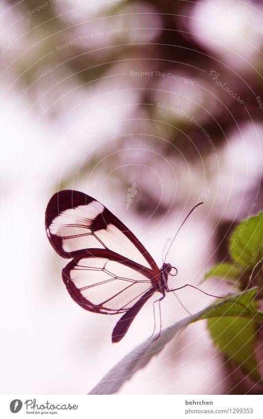 alles licht, das wir nicht sehen Natur Pflanze schön Sommer Blatt Tier Frühling Wiese klein Garten außergewöhnlich fliegen Beine braun rosa Park