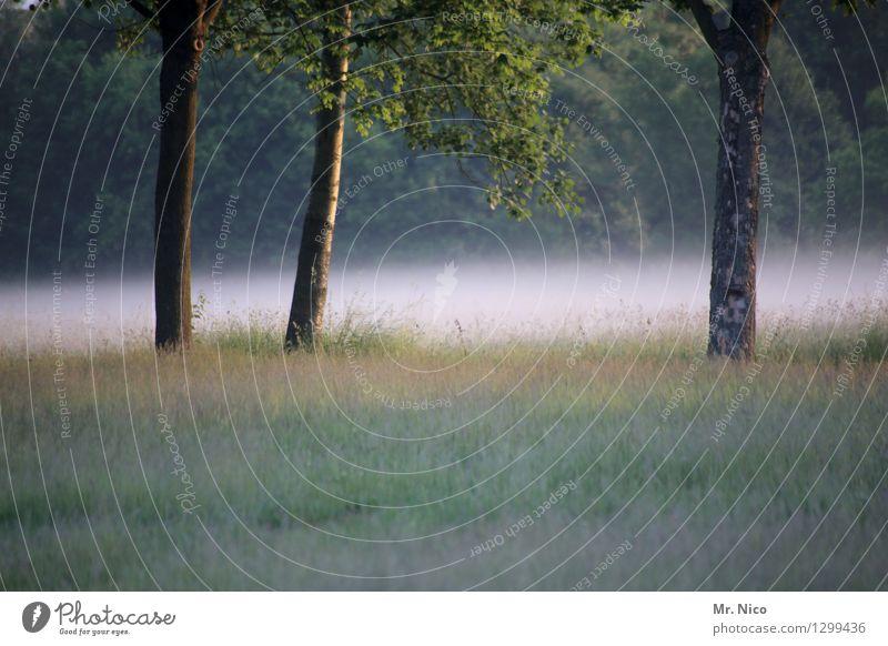 bäumchen wechsel dich Umwelt Natur Landschaft Sommer Herbst Wetter Nebel Pflanze Baum Gras Grünpflanze Wildpflanze Garten Park Wiese Wald grün Nebelschleier
