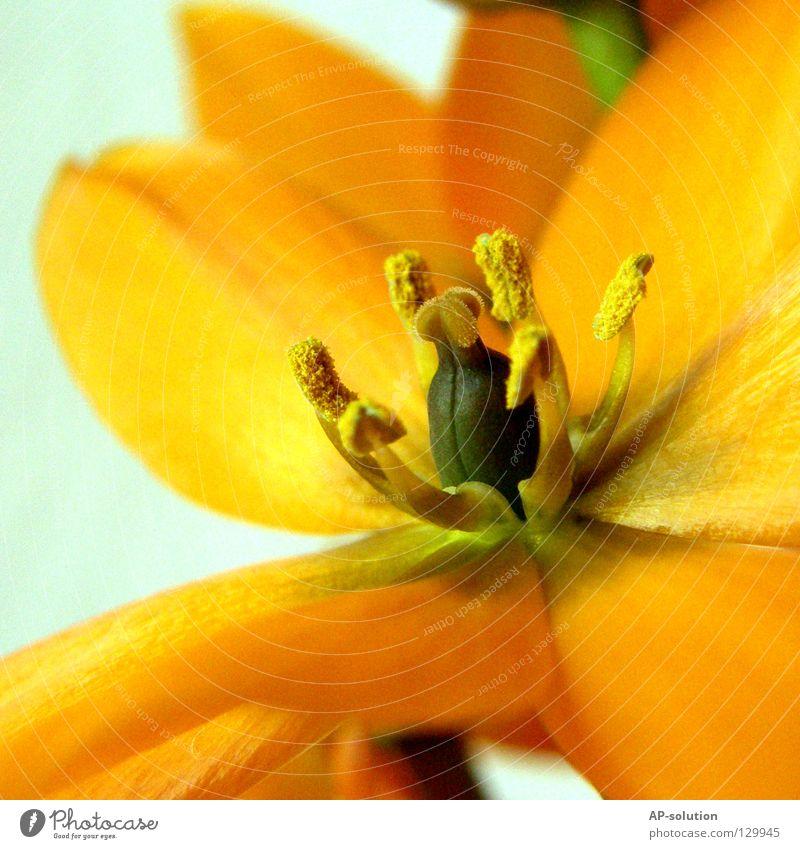 Blüte Natur grün schön rot Pflanze Sommer Blume ruhig gelb Leben Frühling orange Kraft Energiewirtschaft Wachstum