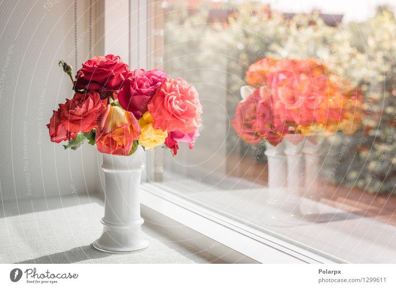 Blumenstrauß aus Rosen in einem Fenster Natur Pflanze schön Farbe Sommer weiß rot Haus Erwachsene Blüte Liebe natürlich Feste & Feiern hell rosa