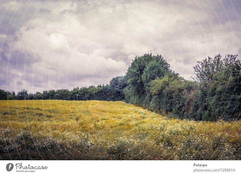 Wolkiges Wetter über einem Feld Himmel Natur Pflanze schön Farbe Sommer Sonne Landschaft Wolken Umwelt gelb Wiese Gras natürlich Wachstum gold