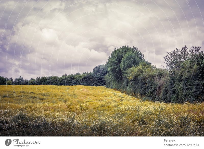 Wolkiges Wetter über einem Feld schön Sommer Sonne Umwelt Natur Landschaft Pflanze Himmel Wolken Gras Wiese Wachstum natürlich gelb gold Farbe ländlich trocknen