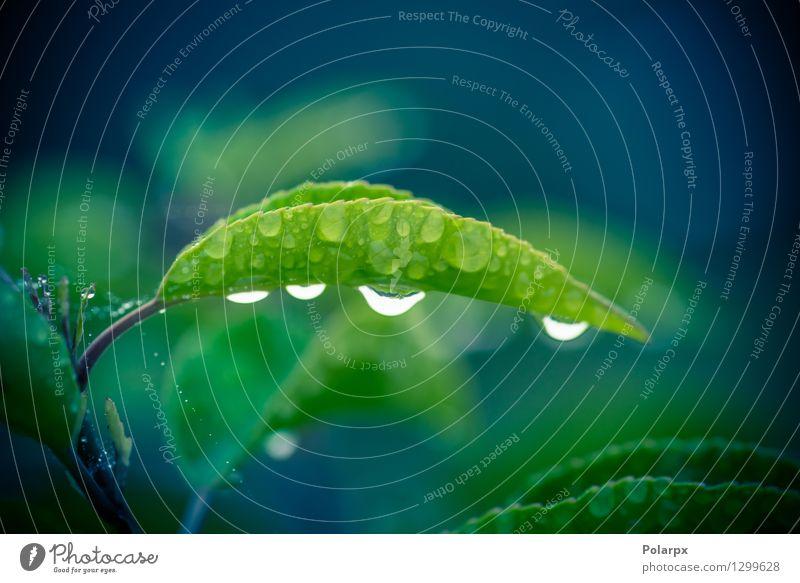 Tau auf einem grünen Blatt nach dem Regen Kräuter & Gewürze Leben harmonisch Sommer Garten Umwelt Natur Pflanze Wassertropfen Wetter Gras Wiese Tropfen Wachstum