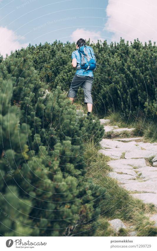 Junge, der unter der Zwergkiefer wandert Natur Ferien & Urlaub & Reisen Pflanze grün Sommer Stein Felsen wandern Ausflug Abenteuer Kiefer Rucksack