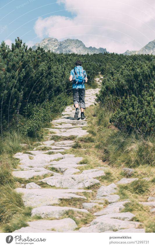 Junge, der unter der Zwergkiefer wandert Mensch Natur Ferien & Urlaub & Reisen Jugendliche grün Sommer Landschaft Junger Mann Freude Berge u. Gebirge Gras