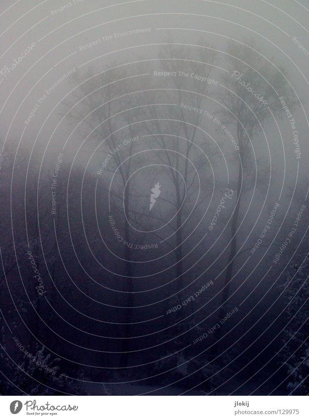 Nebelwald dunkel Ferien & Urlaub & Reisen kalt Wolken Himmel rieseln Gegend Jahreszeiten Winter Baum Wachstum Pflanze Eis Nieselregen Berge u. Gebirge Alpen