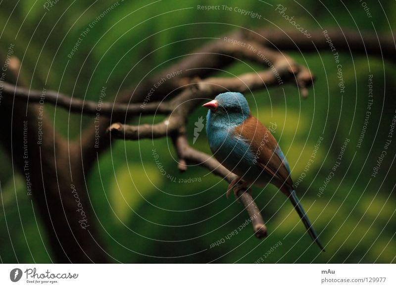 Gesucht: V. aus F. grün blau Tier braun Vogel fliegen Luftverkehr Ast flattern hockend Gezwitscher