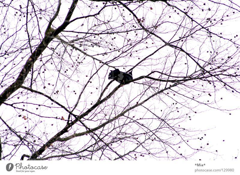 vogel Himmel weiß Baum schwarz Luft Vogel rosa hoch Ast aufwärts Zweig Ornament