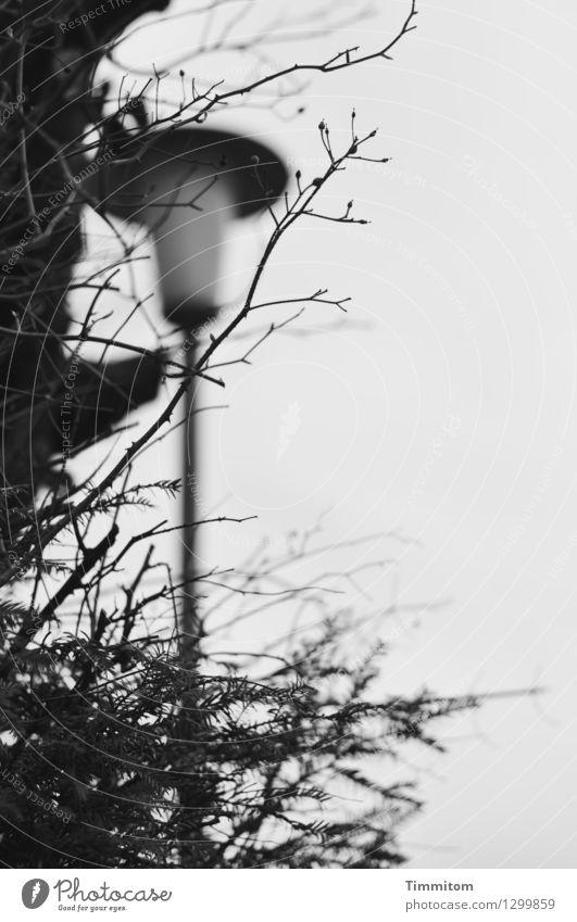 Stadtsplitter... Baum dunkel schwarz Umwelt grau Ast Straßenbeleuchtung kahl