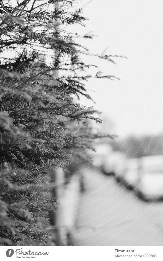 Stadtsplitter.. Baum ruhig dunkel schwarz Straße Gefühle grau PKW ästhetisch Bürgersteig