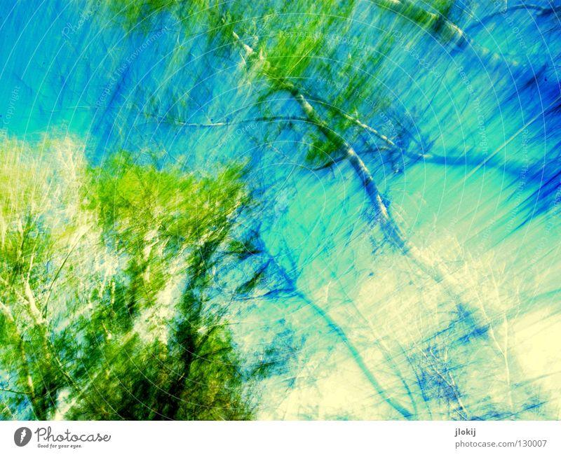 Verwischt Natur Himmel Baum grün blau Pflanze Wolken Farbe Bewegung Frühling Horizont Geschwindigkeit fahren Ast Reihe Jahreszeiten