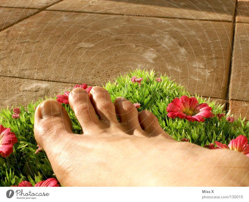Balkonien Blume Sommer Ferien & Urlaub & Reisen Gras Glück Fuß Fröhlichkeit Rasen Fliesen u. Kacheln Idee Terrasse Zehen gestellt
