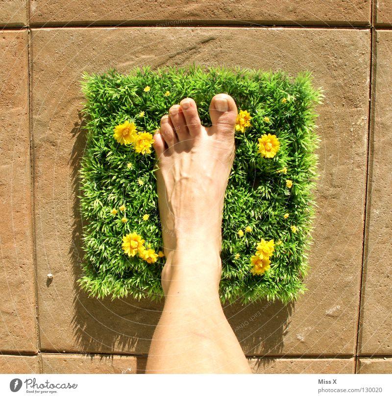 Quadratlatschen Farbfoto Außenaufnahme Fuß Blume Gras laufen mehrfarbig grün Glück Fröhlichkeit Zufriedenheit Lebensfreude Zehen Rasen gestellt