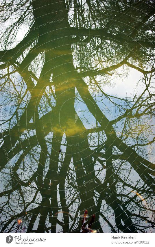 Land unter Natur Wasser Himmel Baum grün blau Pflanze Blatt Wolken Park Fluss Ast Spiegel Bach Becken Wasserbecken