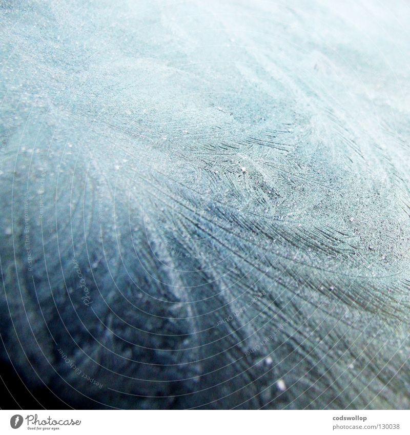 Ice Station Zebra Blume Winter kalt Eis Wetter Frost gefroren Eiskristall Schnellzug Raureif
