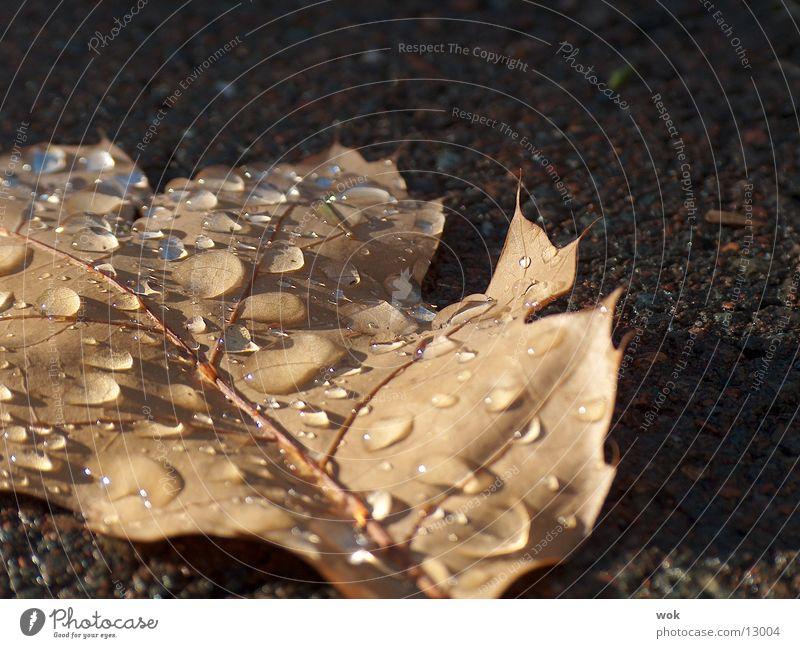 wassertropfen auf blatt Blatt nass Wasser Wassertropfen Makroaufnahme