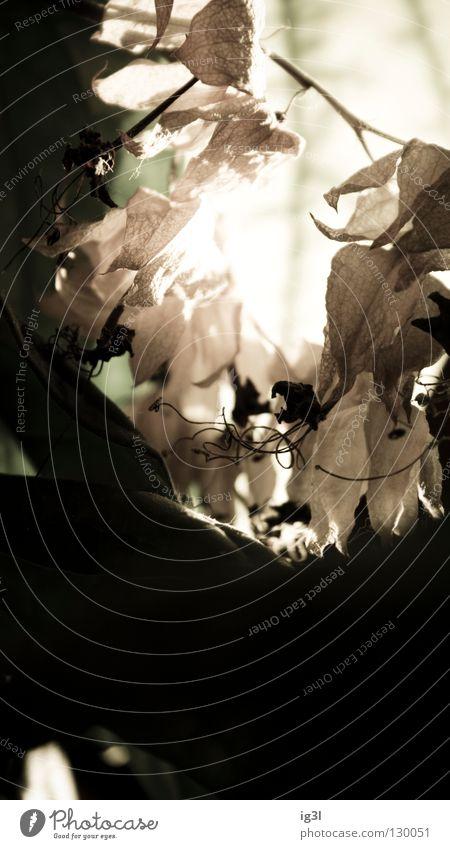 TRAUM°BILDER # can't reach the world behind ```´´ weiß Pflanze Blume Winter träumen Denken Angst Hintergrundbild geschlossen Wachstum Pause Trauer