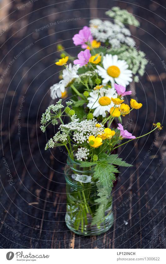 Blumio. II Natur Pflanze Blume Wildpflanze Duft Freundlichkeit Fröhlichkeit frisch schön mehrfarbig Lebensfreude Dekoration & Verzierung Tischdekoration