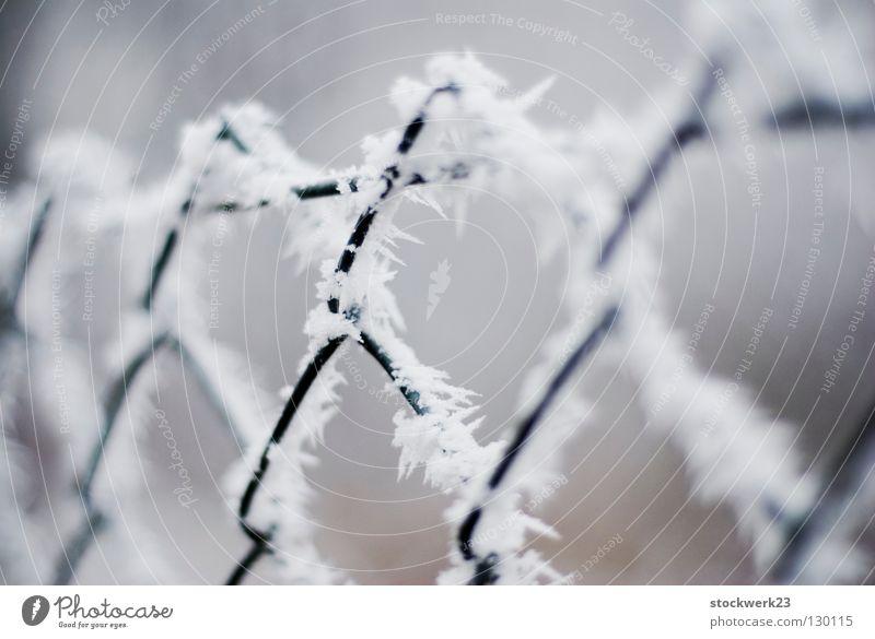 Defence Winter Schnee Wind Eis Frost Zaun Metall Linie kalt Spitze stachelig weiß Sicherheit Schutz standhaft Trennung Wandel & Veränderung Tiefenschärfe