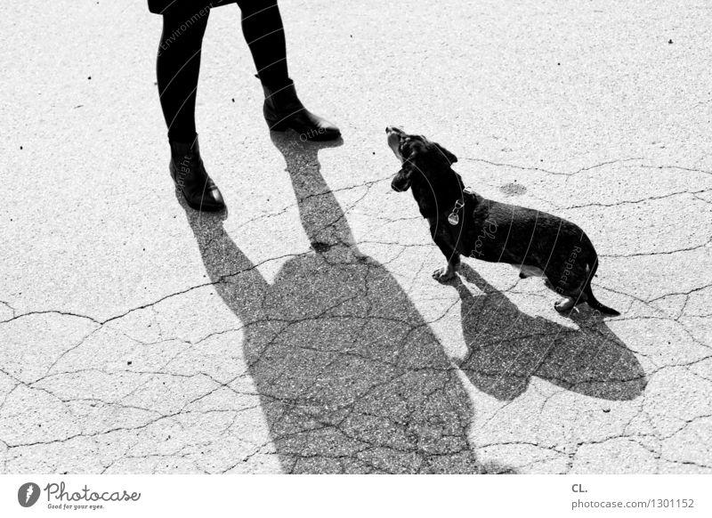 erwartungshaltung Freizeit & Hobby Mensch maskulin Frau Erwachsene Leben Beine 1 Tier Haustier Hund Dackel warten klein niedlich Vertrauen Tierliebe