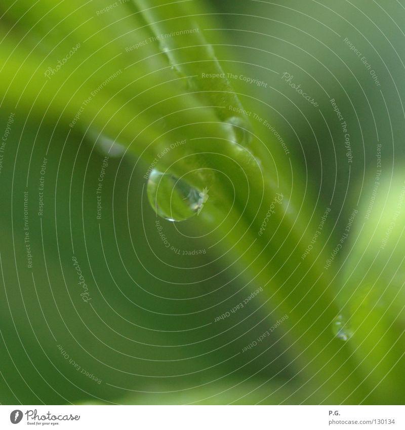 Detail einer Oleanderpflanze Wasser grün Pflanze Farbe Wassertropfen Oleander