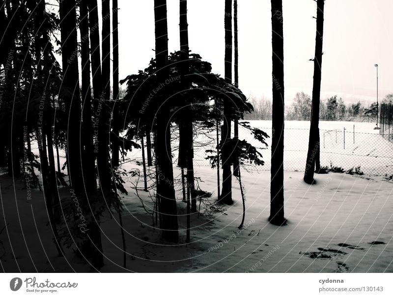 Kann man Schnee hören? weiß kalt Baum Winter Jahreszeiten Wetter Zaun ruhig beobachten Wald Waldrand Sportplatz Horizont Baumstamm Nadelwald dunkel Licht