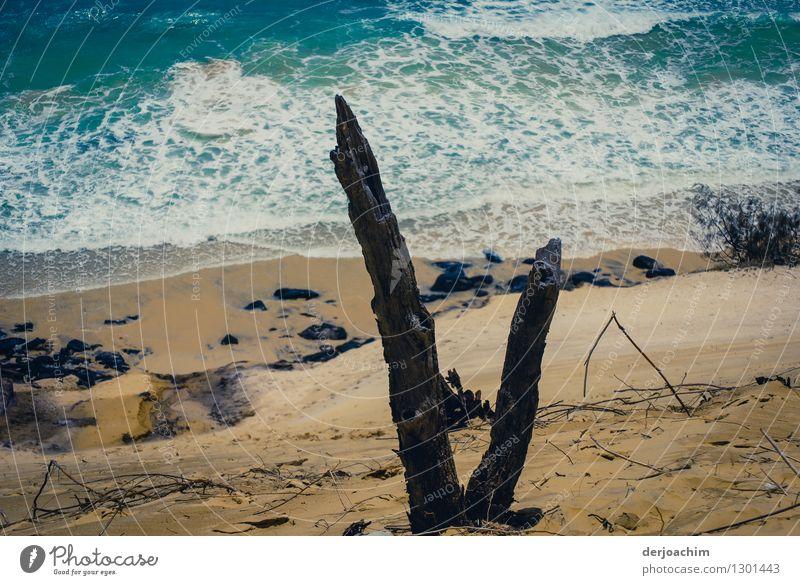 kümmerlich /Baumreste auf einer Düne Sommer Erholung Meer ruhig Umwelt Holz braun Wellen genießen Ausflug beobachten Vergänglichkeit Schönes Wetter trocken