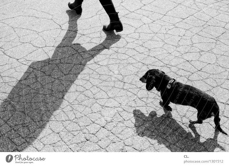 alltagstrott Mensch Hund Tier gehen Freizeit & Hobby Boden Haustier Dackel