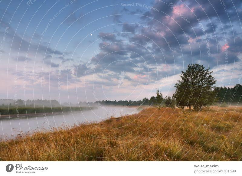 Himmel Natur Ferien & Urlaub & Reisen blau Pflanze schön Wasser Baum Landschaft Wolken Freude Wald gelb Wiese Gras Holz