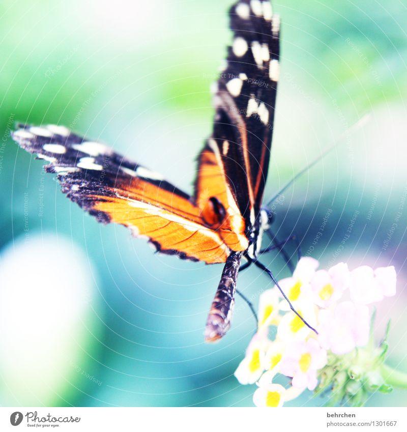 punktlandung Natur Pflanze Tier Frühling Sommer Schönes Wetter Blume Blatt Blüte Garten Park Wiese Wildtier Schmetterling Flügel Hinterteil 1 beobachten