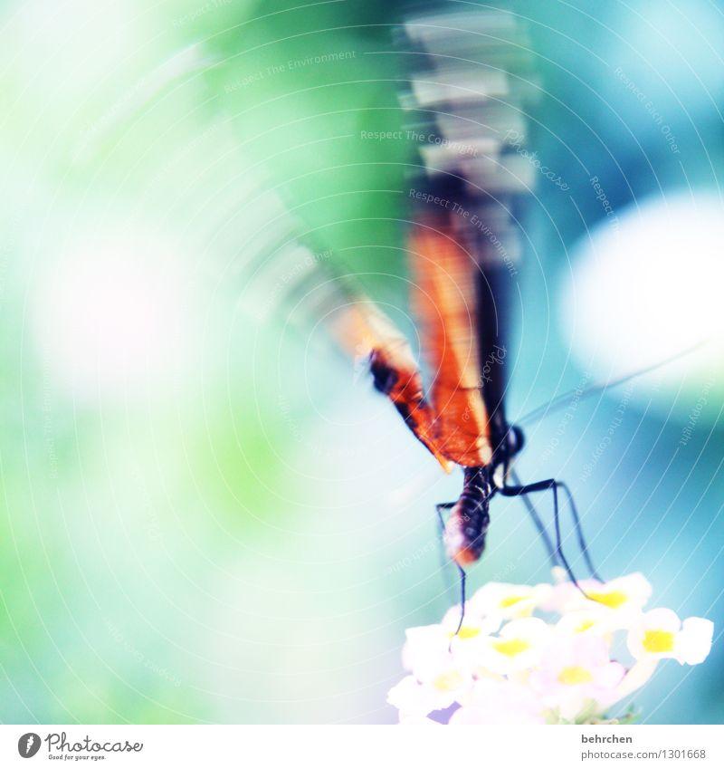bzzzzzzzzzzzzzzzz Natur Pflanze Tier Frühling Sommer Schönes Wetter Blume Blüte Garten Park Wiese Wildtier Schmetterling Flügel Hinterteil 1 beobachten Blühend