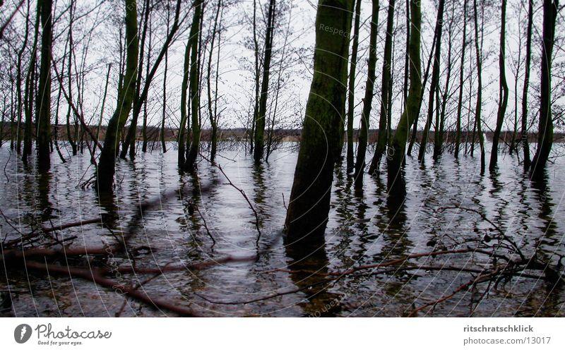 magroven;-) Wasser Baum See