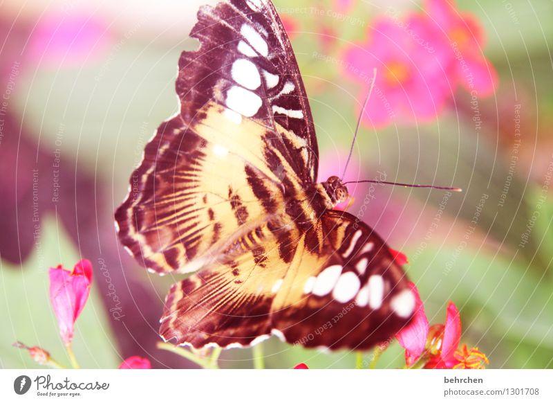 knallig ja knallig... Natur Pflanze schön Sommer Erholung Blume Blatt Tier Blüte Frühling Wiese Garten außergewöhnlich fliegen braun rosa
