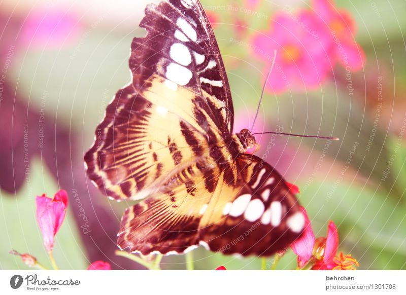 knallig ja knallig... Natur Pflanze Tier Frühling Sommer Schönes Wetter Blume Blatt Blüte Garten Park Wiese Wildtier Schmetterling Flügel 1 beobachten Erholung