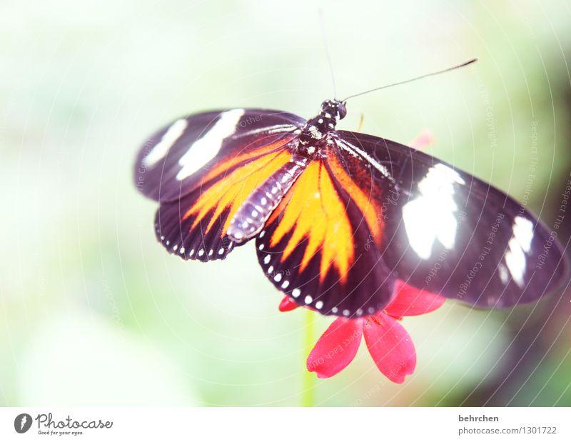 verstrahlt Natur Pflanze Tier Frühling Sommer Schönes Wetter Blume Blatt Blüte Garten Park Wiese Wildtier Schmetterling Flügel 1 beobachten Erholung fliegen