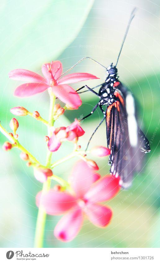 zünglein Natur Pflanze Tier Frühling Sommer Blume Blatt Blüte Garten Park Wiese Wildtier Schmetterling Tiergesicht Flügel 1 Erholung fliegen Fressen sitzen