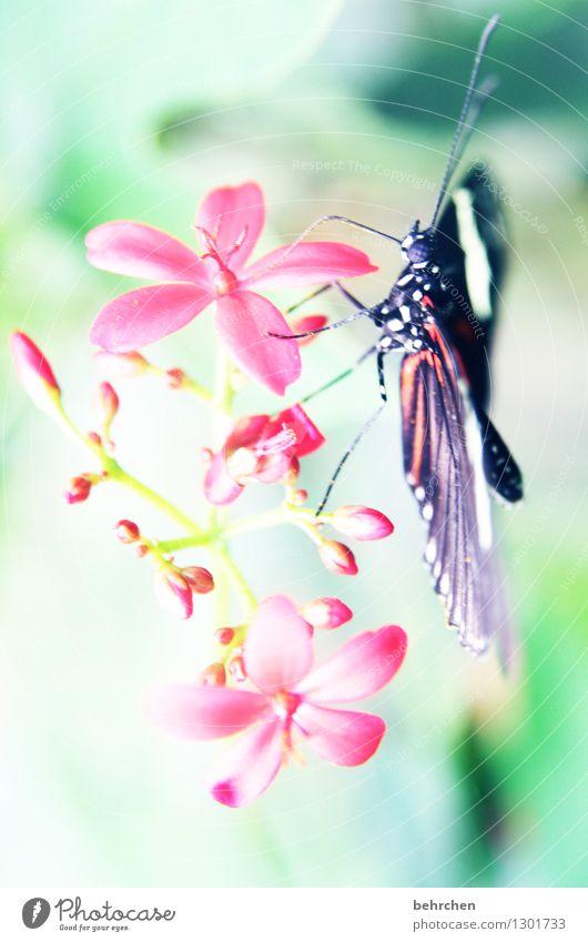 rumstochern Natur Pflanze Tier Frühling Sommer Schönes Wetter Blume Blatt Blüte Garten Park Wiese Wildtier Schmetterling Tiergesicht Flügel 1 beobachten