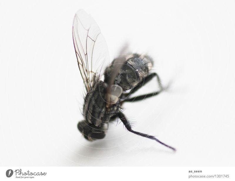 Fliegenbein Tier Beine Flügel Auge 1 krabbeln authentisch bedrohlich dunkel Ekel gruselig grau schwarz Tod Angst Senior bizarr Desaster Natur