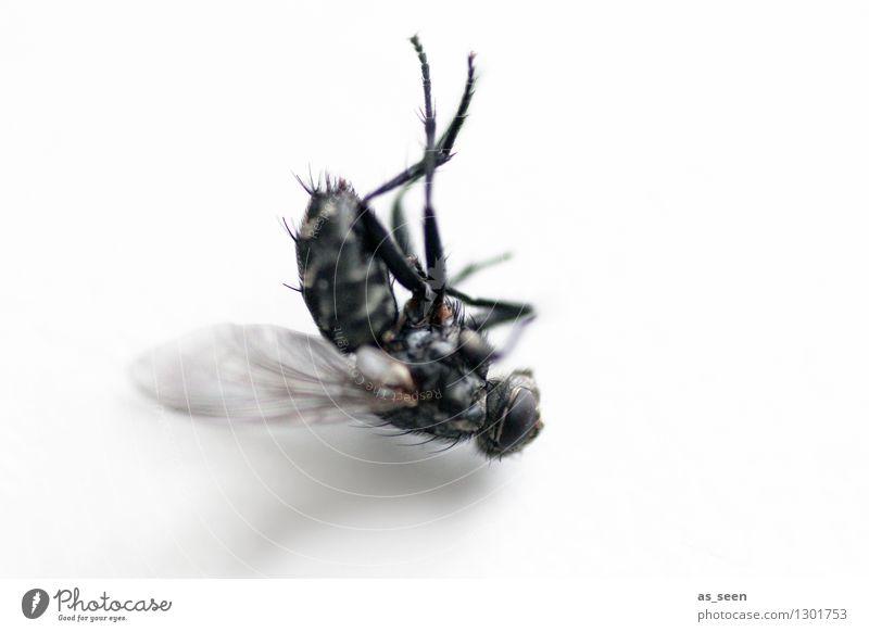 Post Mortem Halloween Umwelt Tier Fliege Insekt Flügel Stubenfliege Auge 1 liegen authentisch Ekel gruselig grau schwarz Angst Entsetzen Todesangst Senior