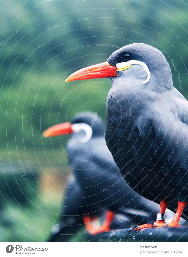 augen geradeaus! Natur schön Erholung Tier Auge grau außergewöhnlich fliegen Vogel orange Wildtier sitzen Feder Flügel beobachten Coolness