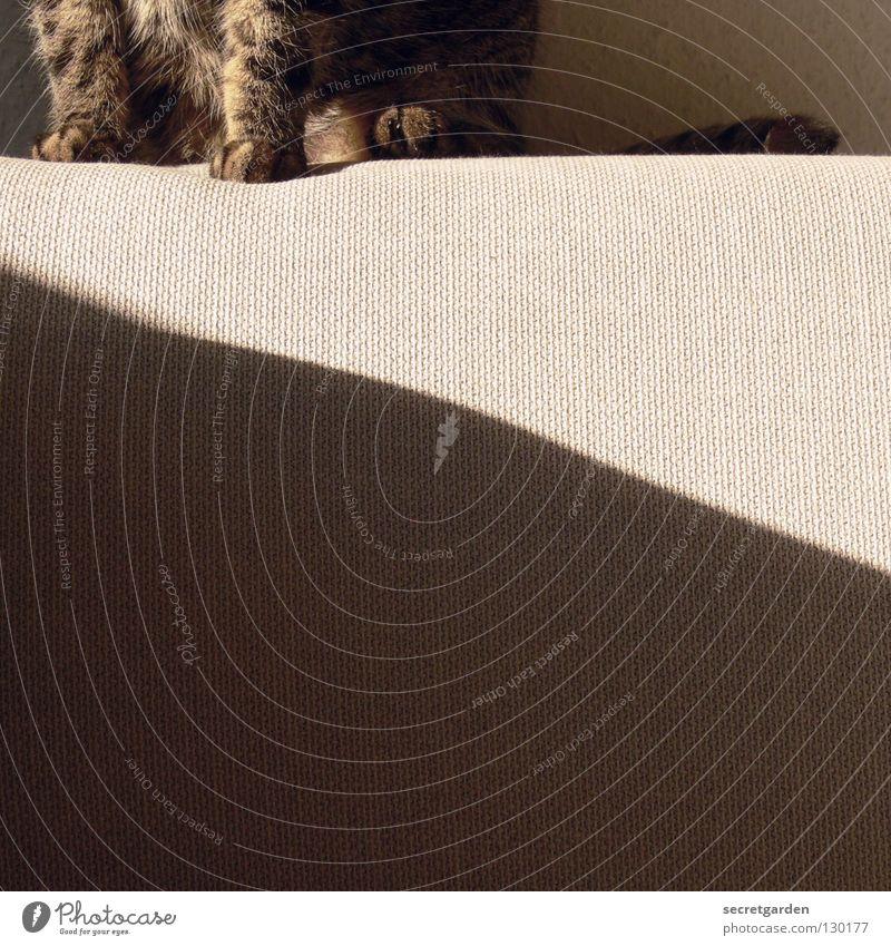 schräge katze Sofa Katze Tier Krallen Katzenpfote Pfote Erholung ausgestreckt hängen gestreift Stoff Physik kuschlig grau gemütlich lümmeln Fernsehen Material